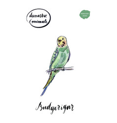 watercolor green and yellow budgerigar vector image