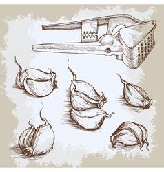 hand drawn garlic set Vintage retro background vector image