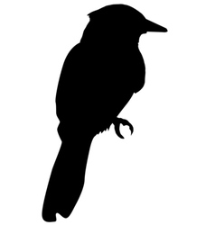 Silhouette of kingfisher vector