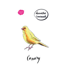 watercolor yellow canary bird vector image vector image