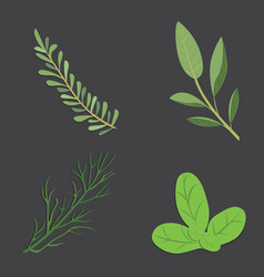 Aromatic herbs set fresh and spices vector