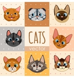 Set of eight colorful cartoon cat faces vector