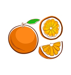 hand drawn orange with slices vector image