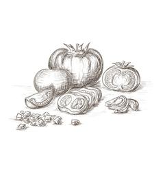 Hand drawn tomatos vector image