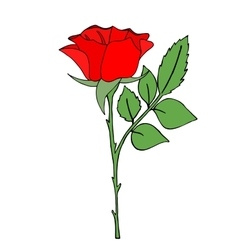 Bright red rose vector