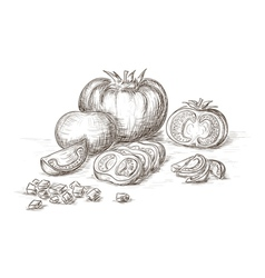 Hand drawn tomatos vector