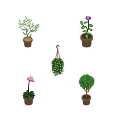 Isometric houseplant set of blossom flower fern vector