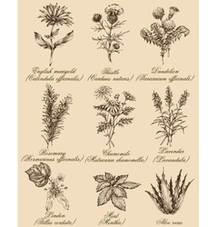 Flowers and herbs set medicinal plants and spices vector