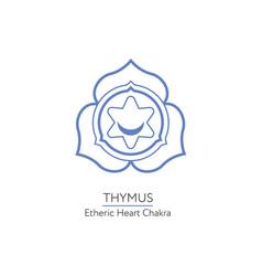 Thymus - chakra of human body vector