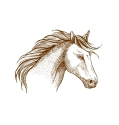 Horse sketch icon of arabian stallion vector image