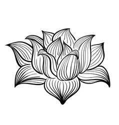 Black and White Lotus flower vector image