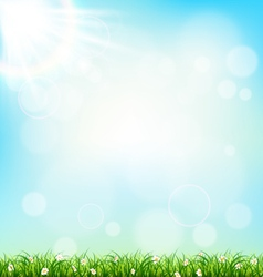 Green grass lawn with chamomiles on blue sky vector image