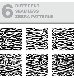 set of 6 zebra seamless textures as a backgrounds vector image