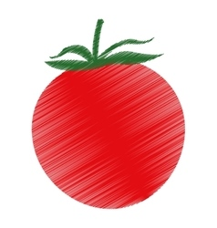 Isolated tomato design vector