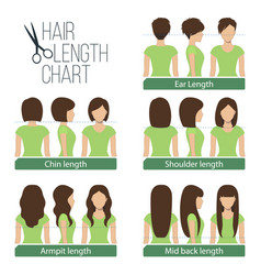 hair length chart vector image