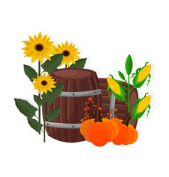 autumn harvest sunflower corn pumpkin and barrel vector image