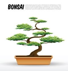 bonsai vector image vector image