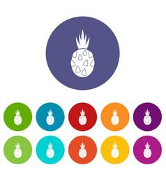 pitaya dragon fruit set icons vector image