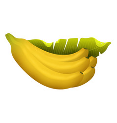 ripe yellow banana fruits realistic juicy healthy vector image