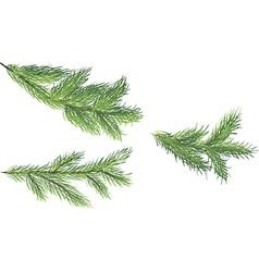 Set of fir brunches vector