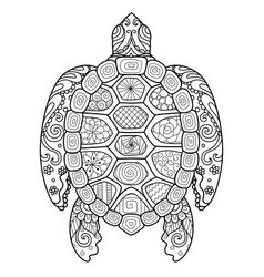 zendoodle stylize of beautiful turtle vector image