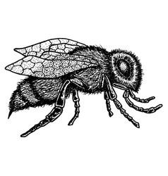 Monochrome animal icon vector