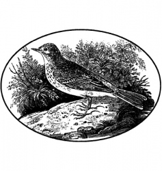 Engraving of bird vector