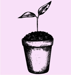 Young plant pot vector