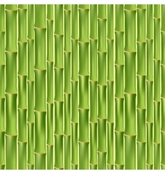 Green bamboo seamless texture vector image