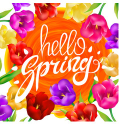Hello spring colotful tulips flowers white vector