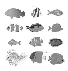 Set of Sea Fish Color Design Flat vector image vector image