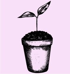 Young plant pot vector