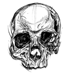 Broken skull drawing line work vector