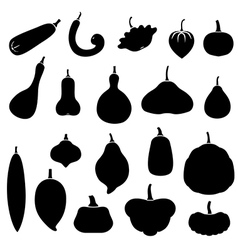 squash set vector image