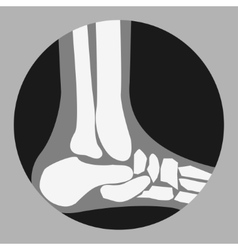 Human foot bones vector