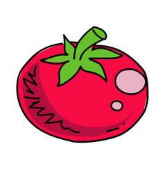 tomato cartoon hand drawn image vector image vector image