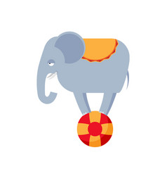 Elephant on ball isolated circus animals on white vector