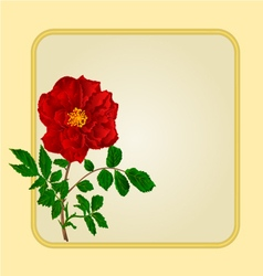 Golden frame with red rose greeting card vector