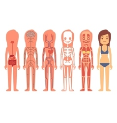 Medical woman body anatomy vector