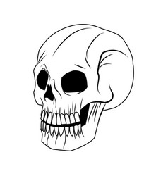 Skeleton of the human head vintage bone vector