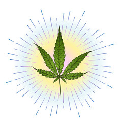 marijuana green leaf with bright colorful shining vector image