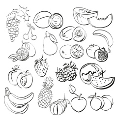 Different fruits set vector
