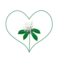 White ixora flowers in a heart shape vector
