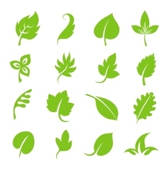 Leaf icon set Fresh green leaves various shapes vector image vector image