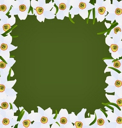 white narcissuses frame vector image