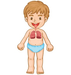 Respiratory system in human boy vector