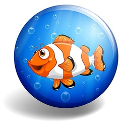 Clownfish swimming under the water vector image