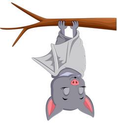 Cute bat cartoon sleeping vector