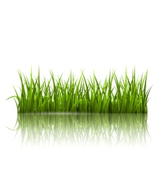 Green grass lawn with reflection on white floral vector
