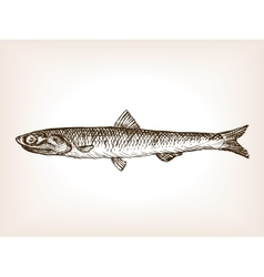 Anchovy fish sketch style vector image vector image